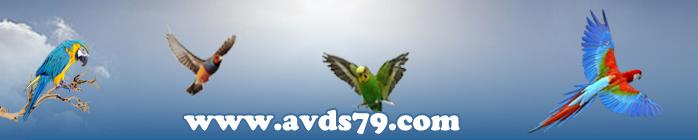 Amicale des Volières Deux-Sévriennes (AVDS79)